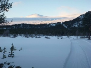Skispor fra Steinholet